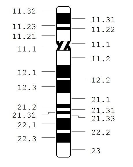 18p Chromosome18