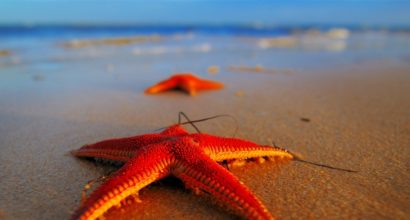 starfish-orange